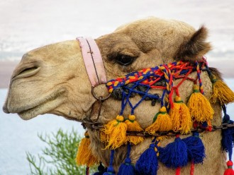 Marrakech: Camel ride