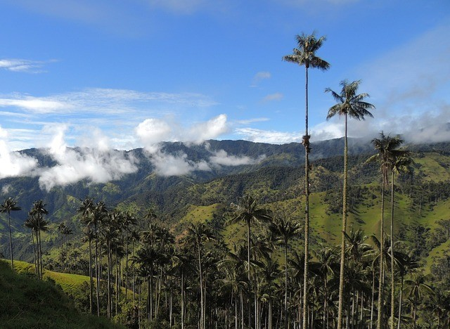 Bogotà: Birdwatching Tour in Tolima - 2 days