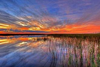 Tour di 2 Giorni al Parco Everglades, Sanibel Island e Outlet Shopping da Miami