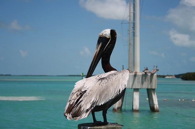 1 Day Tour to Key West from Miami