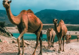 Oman a destination all to be discovered
